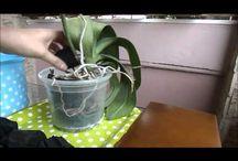 jardim - Orquídeas