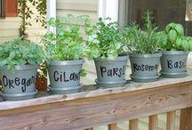 Diy herb/plants