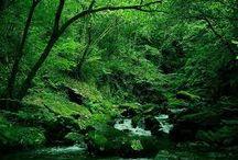 Campo/countryside in Sanxenxo /  Sobre los espacios verdes Sanxenxo http://www.sanxenxotur.com/