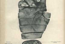 Graphic Arts > Anatomy Art