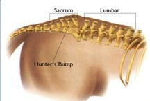 Horse Health and Conformation