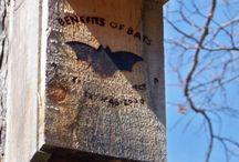 BATS & BATHOUSES