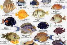 Fishing: Fish Identification