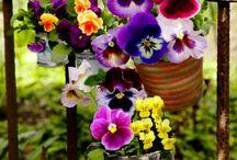 Flores / Arranjos
