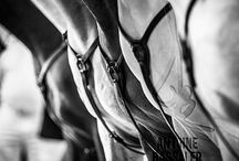 Equine Inspired