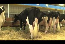 Videos / by HolsteinWorld DairyBusiness