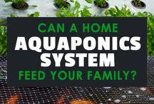 Aquaponics / hydroponics / vertical g.