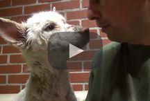 Homeless dog rescue