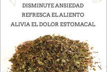 Plantas medicinales♥