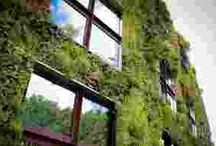 plantas para muro