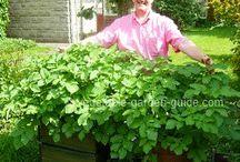 Micro Gardening / Small Garden Container Gardening.