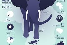 infographics / by Emily Cornelius