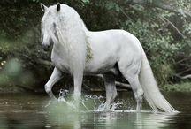 Horses IV