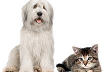 Bissell Partners for Pets