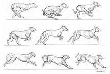állati mozgás
