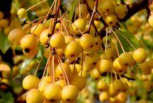 Fruits d'automne!
