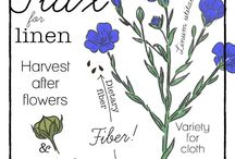 To Cultivate Our Gardens / All things gardening and cultivation!