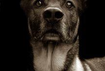 Woof <3