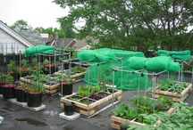 Rooftop Garden: SB Style