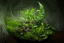 Decorative Features for Terrariums and Bottle Garden / Beautiful, interesting, fun and quirky features to add to your terrarium or bottle garden.