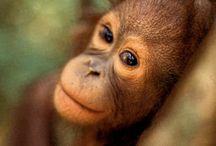 Land of Borneo
