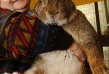 Rabbits!!!  :) / by Kriss Bottino
