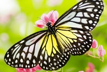 Butterflies, dragonflies, reptiles and bugs