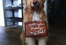 Roundup Post: Pet Marriage Proposals
