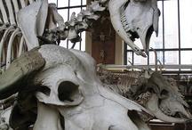 Them bones, them bones, them dry bones.