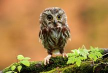 OWLS!! / by Courtney Clements