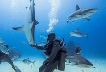 under-water, snorkeling&diving
