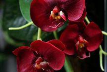 Pokojové rostliny / Pokojové rostliny
