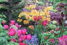 Spring gardens / When you sell in spring time..add some colour