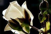 Фото цветов / Самые красивые фото цветов здесь...