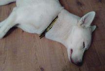 Sleepy Dogs!