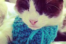 inverno e gatinhos