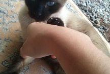 Cats da Kety