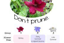 Pruning / Garden