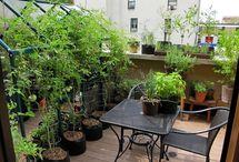strešná zahrada