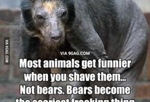 bear with no fur