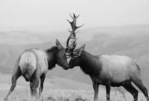 Animal Kingdom / by Gabe Molnar