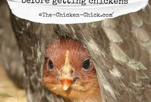 Do I really want chickens? / by Vicki Welch