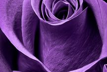 Colour therapy: violet