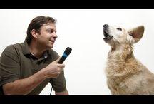 HUNDETRAINING / Trainingstips & Trainingsvideos mit dem Hund