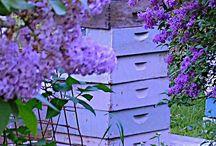 Amazing beehives