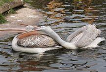 Dierentuin Vogels