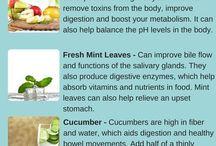-gut health-