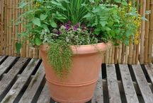My garden / Herbs