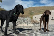 Guardians of the Vineyard / Many vineyards and wineries in Argentina keep animals on their properties. Many of these businesses are family-owned so they are an integral part of our wine country as well.