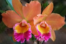 Orchids / by Jamie Mathis